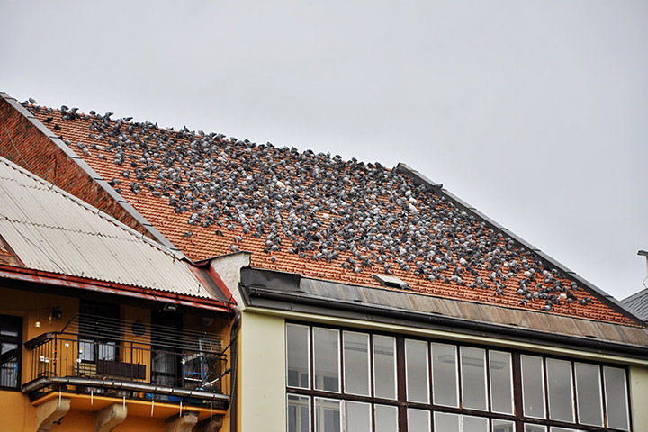 A2B Pest Control are able to install spikes to deter birds from roofs in Hanwell.