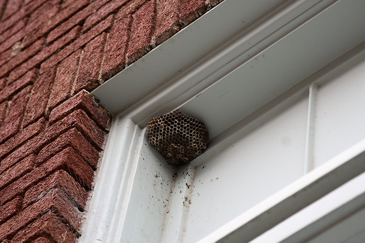 We provide a wasp nest removal service for domestic and commercial properties in Hanwell.